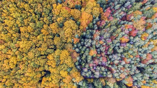 Herbstwald von oben, Gleissenfeld