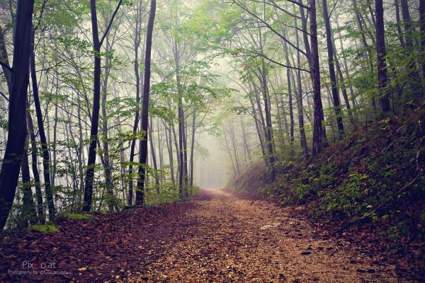 Herbst im Naturpark Türkensturz